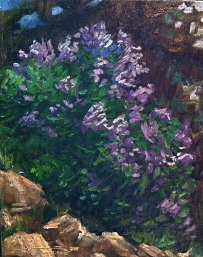 June8-LilacOnTheHill
